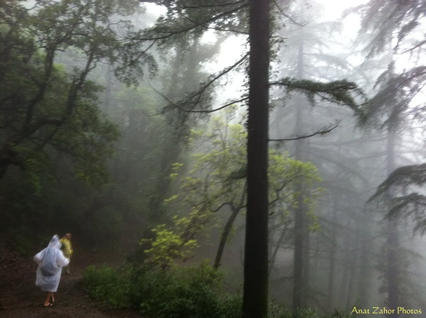 wonder forest anat zahor india