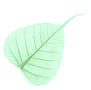 boddhileaf